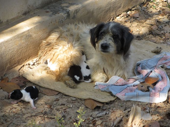 91185987 - lovely street dog with her puppies in thailand
